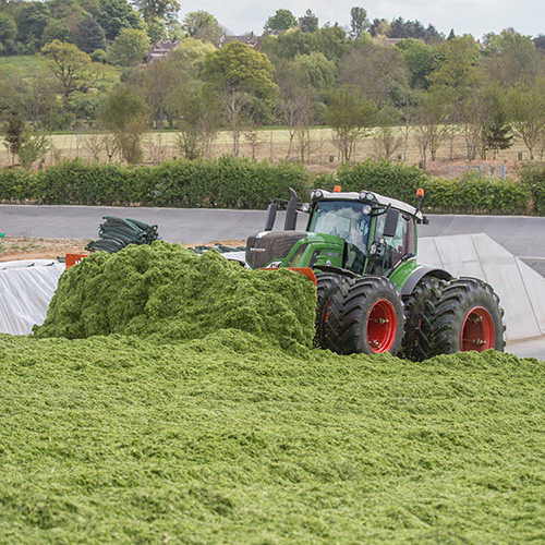 Energy crops Harvest