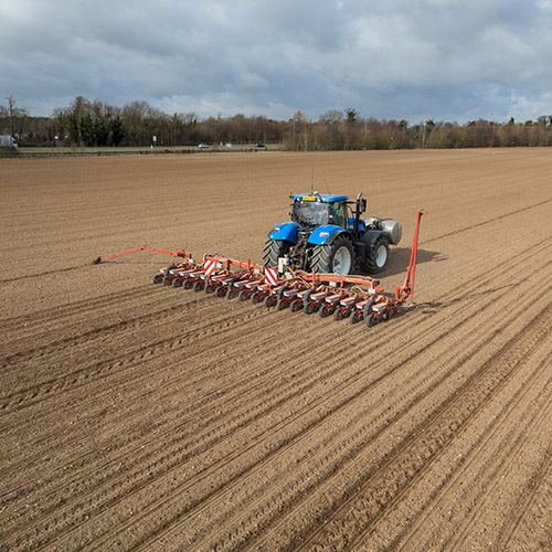 Sugarbeet drilling