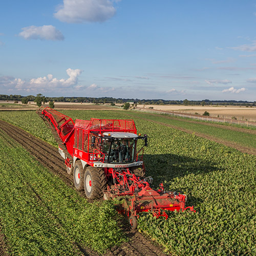 Sugarbeet harvesting